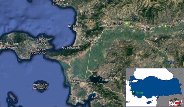Priene Google Maps Görüntüsü
