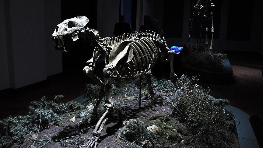8 Milyon Yıllık Fosiller Ziyaretçilerini Bekliyor 1